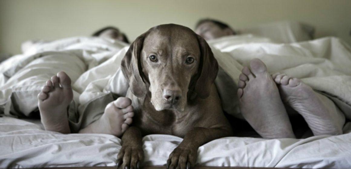 ¿Por qué a los perros les encanta dormir bajo la cama?