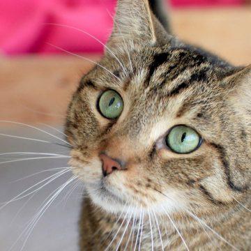 5 datos interesantes sobre el cerebro de un gato