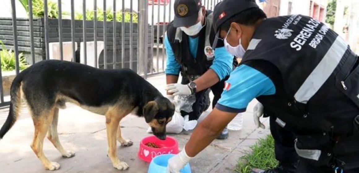 Durante cuarentena, serenos reparten comida y agua a mascotas sin hogar