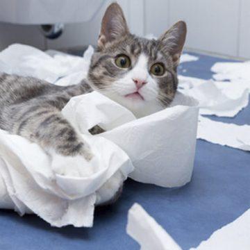 ¿Tu gato te sigue al baño? Esta es la razón por la cual lo hace