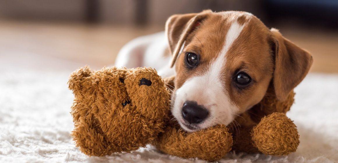 ¿Cuándo es el momento adecuado para bañar a un cachorro?