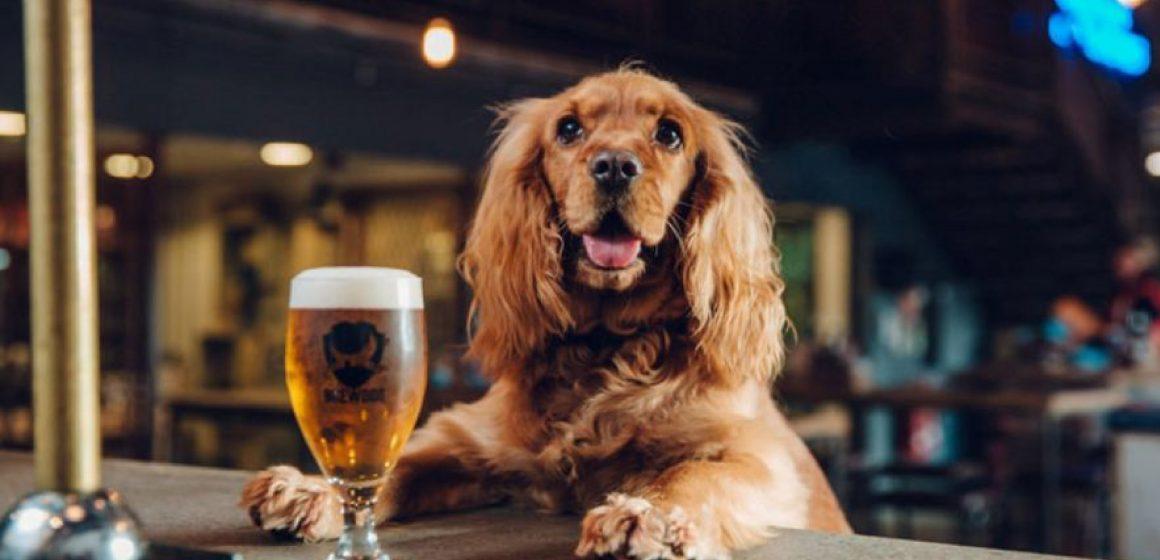 Regalan cerveza a quienes adopten a un perro durante la cuarentena