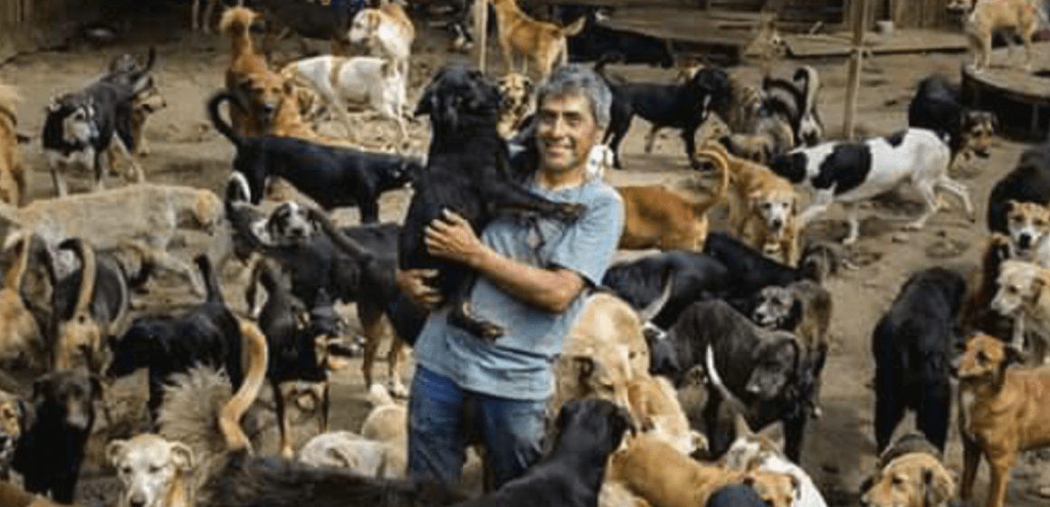 Facebook: hombre cuida a decenas de perros durante la cuarentena