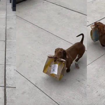 Perro se convierte en viral al ser captado haciendo delivery de comida en plena cuarentena