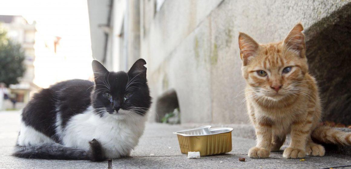 Covid-19: gatos son cuidados por voluntarios en plena cuarentena