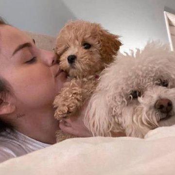 ¡Increíble! Celebridades acogen mascotas sin hogar durante cuarentena
