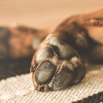 Covid-19: Así se hace un limpiador casero para mascotas