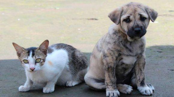 COVID-19: la ciudad de Shenzhen en China prohíbe comer perros, gatos y animales salvajes