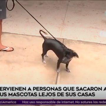 ¡De no creer! La PNP y el Ejército intervinieron a personas que sacaron a sus mascotas en Lima Metropolitana