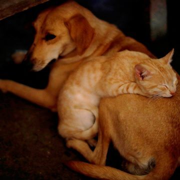 COVID-19: científicos chinos evalúan qué mascota es más susceptible de contraer el coronavirus