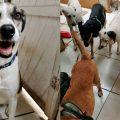 COVID-19: albergue de animales necesita ayuda para alimentar a 28 perros abandonados