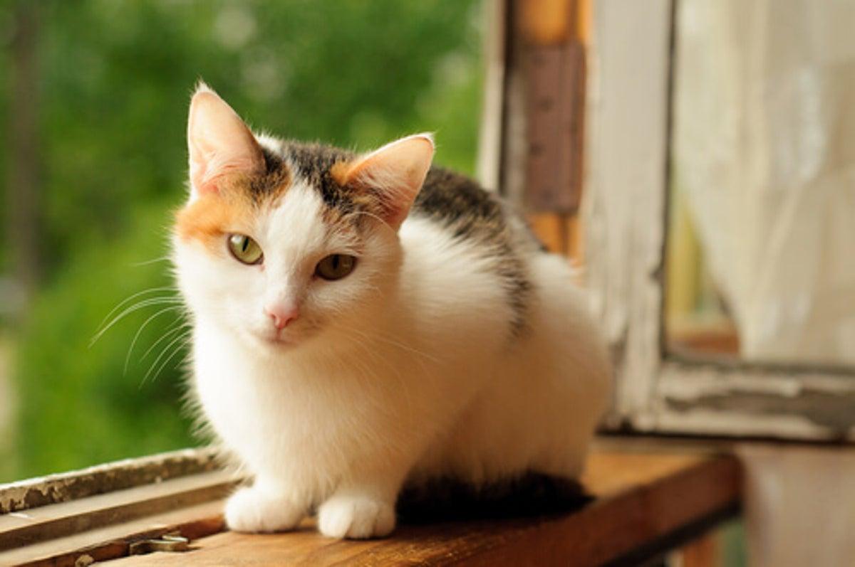 ¿Cómo mejorar el estilo de vida de nuestros gatos?