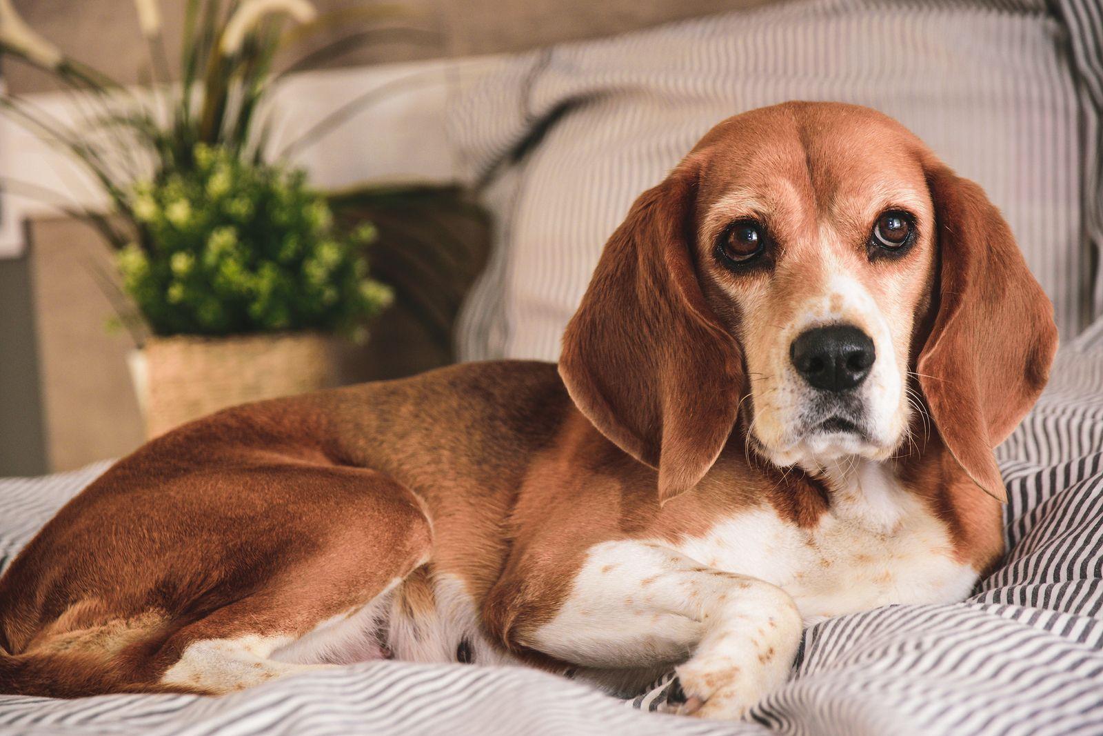 Covid-19: cinco cosas que estás haciendo mal con tu mascota durante la cuarentena