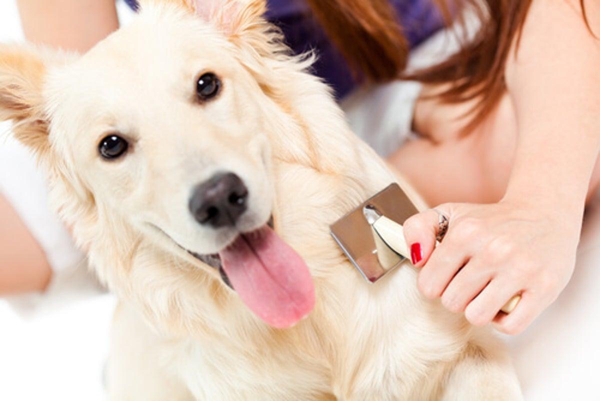 Caída del pelo en los perros. ¿Cuál es la razón?