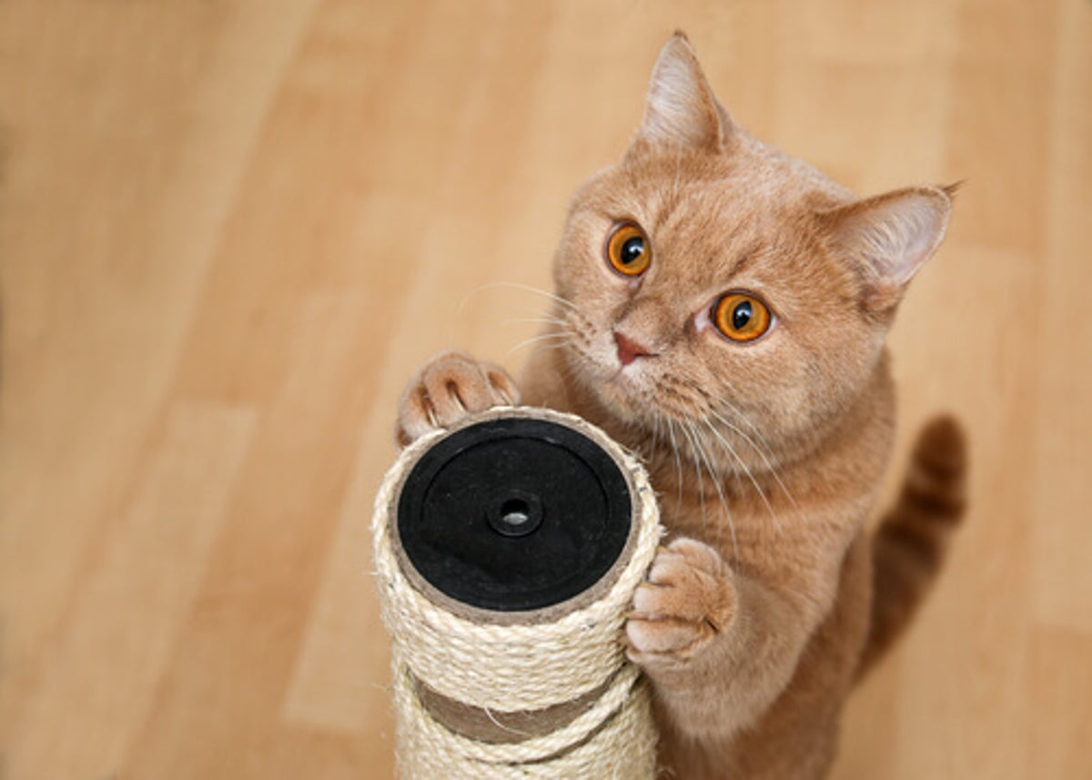 El lenguaje corporal de un gato dice mucho de su salud
