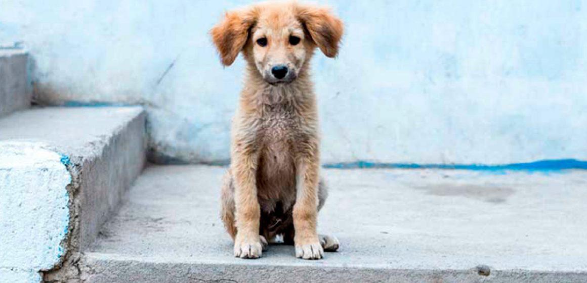 Municipalidad de Surco multará a quienes abandonen a sus mascotas durante la cuarentena