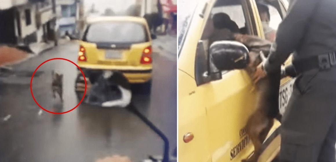 Perro corre detrás del auto de su dueña después de ser abandonado