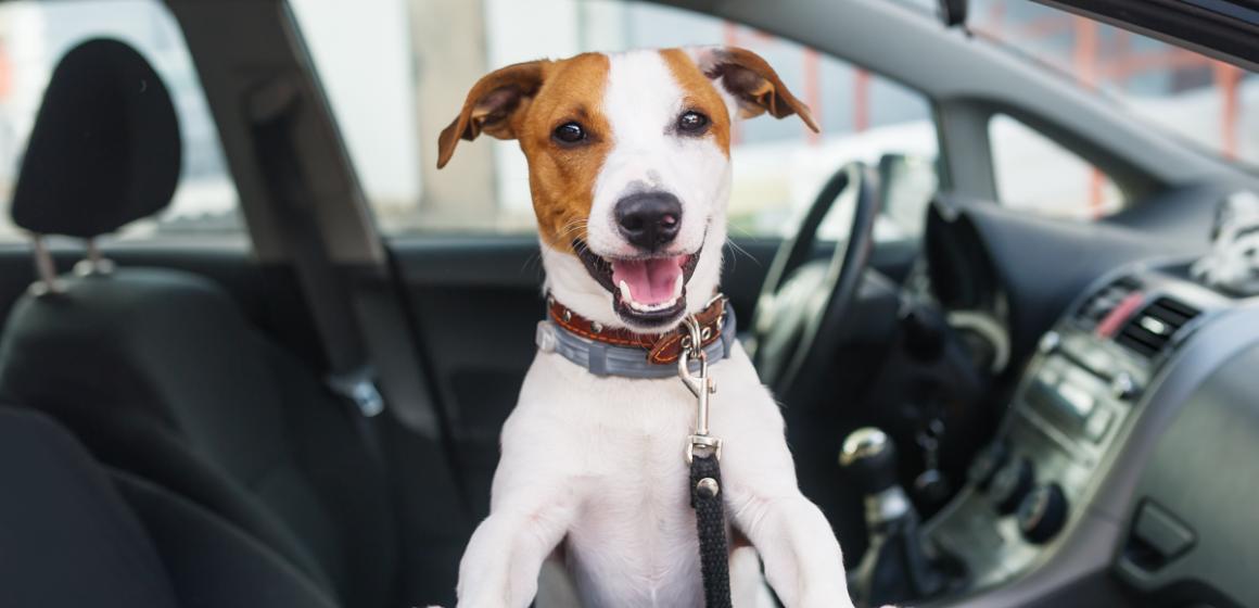 Viral: perro toca claxon del carro de su dueño para apurarlo