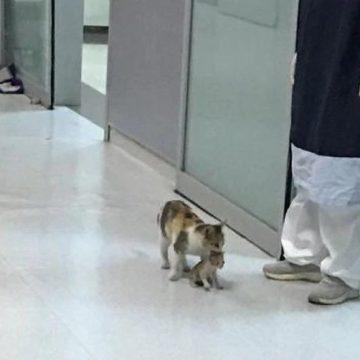 Facebook: Gata lleva a su bebé enfermo a un hospital