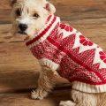¡Cuidado con el cambio del clima y el frío en tus mascotas!