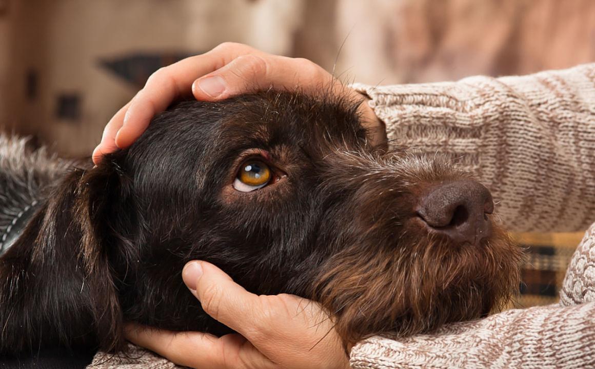 La diabetes canina en nuestras mascotas