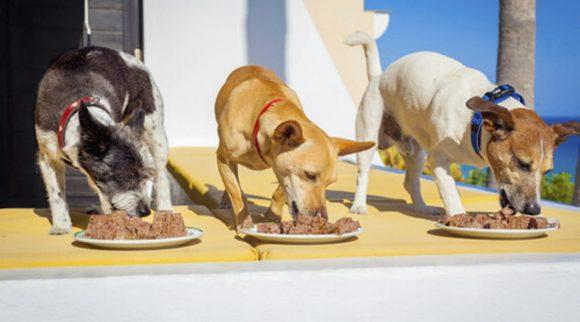 La alimentación recomendada para tu mascota durante la cuarentena