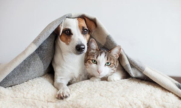 ¿Cómo presentar a dos mascotas que van a vivir juntos?
