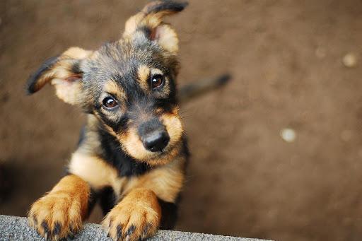 Razones para adoptar a una mascota durante la cuarentena