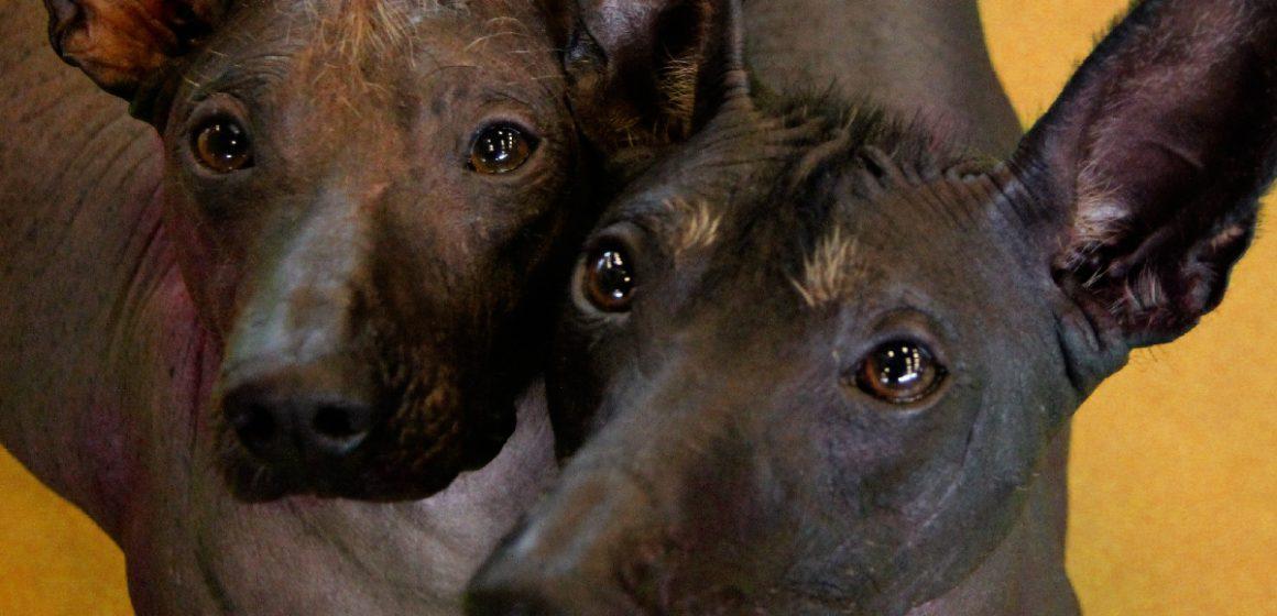 Parque de las Leyendas celebró el día del perro peruano junto a mascotas que alberga