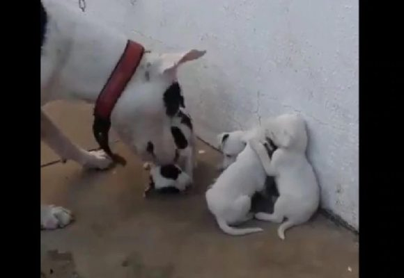 Viral: Perro es captado regañando a sus cachorros