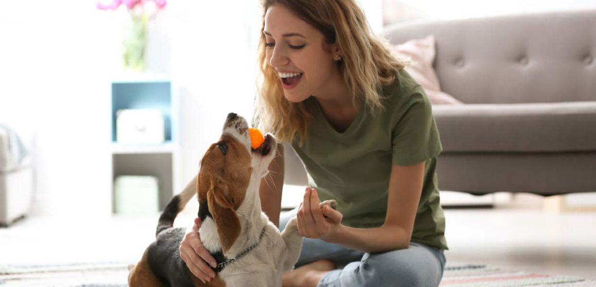 ¿Cómo mantener un hogar limpio cuando tenemos una mascota?