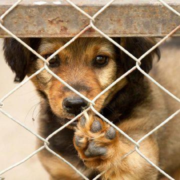 Agentes de serenazgo en Huancayo rescatan a perros y gatos abandonados durante la cuarentena