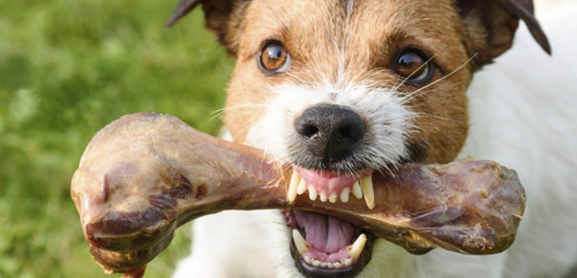 ¿Cómo evitar que un perro gruña cuando come?