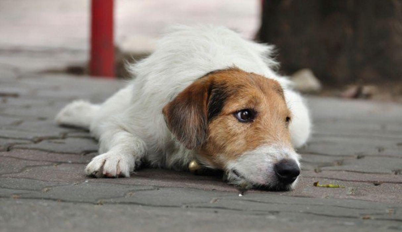 Perro salva a hombre que iba a ser asaltado en San Juan de Miraflores