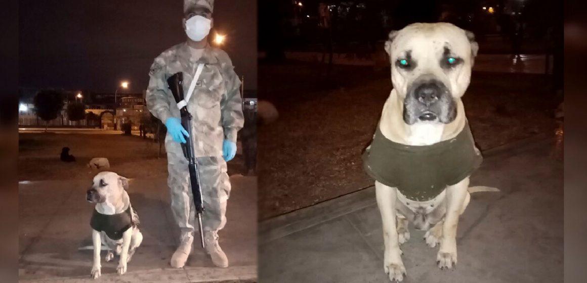 Militar adopta a perro callejero durante cuarentena