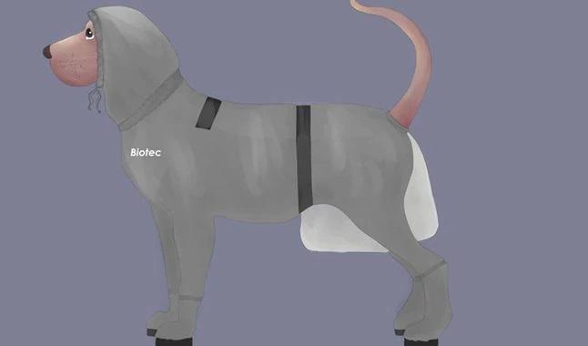COVID-19: adolescente diseña traje de protección para mascotas
