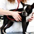 Enfermedades del corazón: ¿Cómo identificarlas en nuestras mascotas?