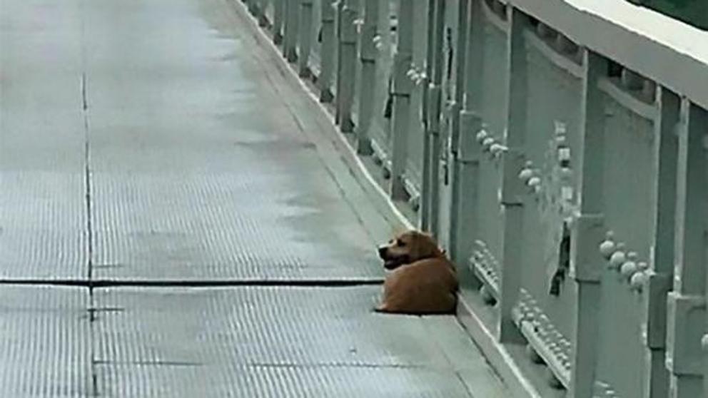 Perro espera fielmente al regreso de su dueño en Wuhan