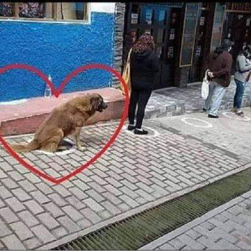 Perro genera furor en Facebook al hacer cola respetando el distanciamiento social