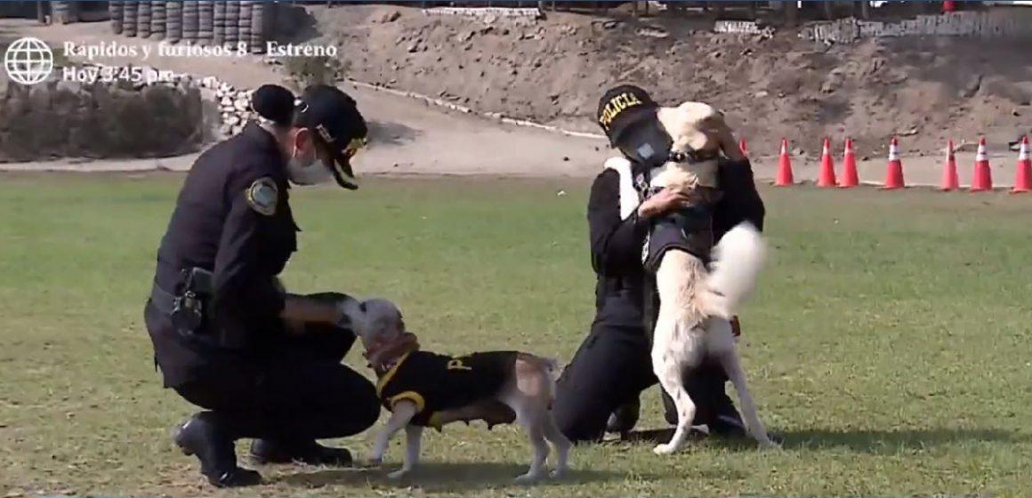 Mascotas fueron adoptadas por la Policía Nacional del Perú durante el estado de emergencia [VIDEO]