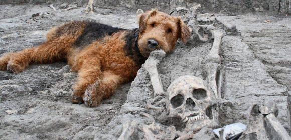 CROACIA: Perros colaboran con trabajos arqueológicos para hallar huesos de 5000 años de antigüedad