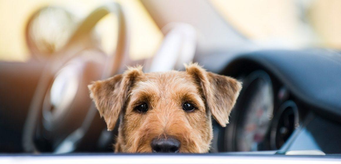 ¡Cuidado! Dejar a tu perro en el auto podría ser fatal incluso en invierno