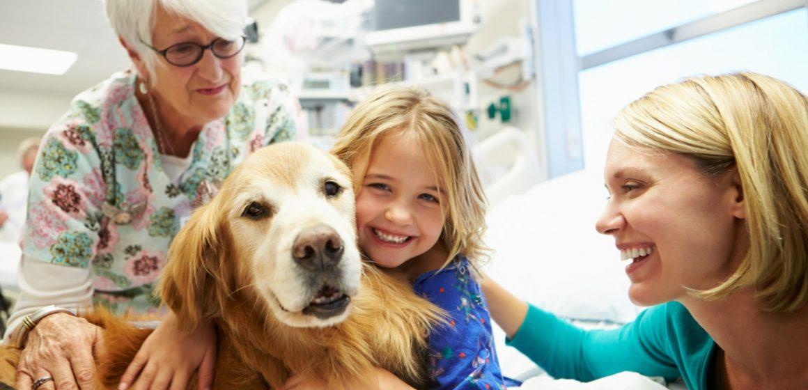El poder curativo de los perros de terapia