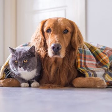 Nuestras mascotas también padecen con este frío intenso: Algunos consejos útiles para su cuidado