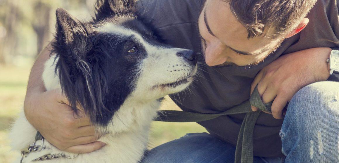 ¿Por qué tu mascota se autolesiona la cola y qué puedes hacer?