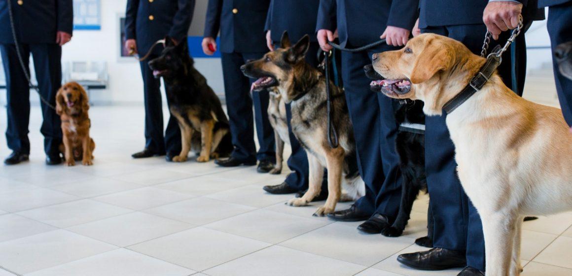 Finlandia: Entrenan a perros para detectar coronavirus