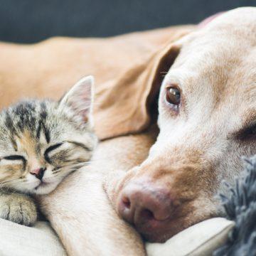 Más del 50% de los gatos y perros europeos están infectados por parásitos