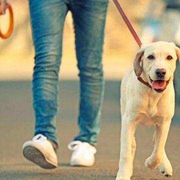 Domingos de inmovilización social: Personas acataron normativa y pasearon a sus mascotas