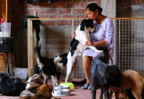 Realizan campaña para ayudar a albergues de perros y gatos en Lima