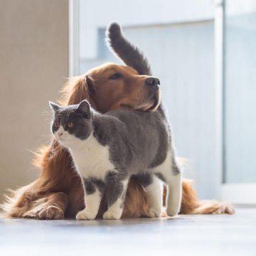 Proponen declarar la esterilización de perros y gatos como política de salud pública